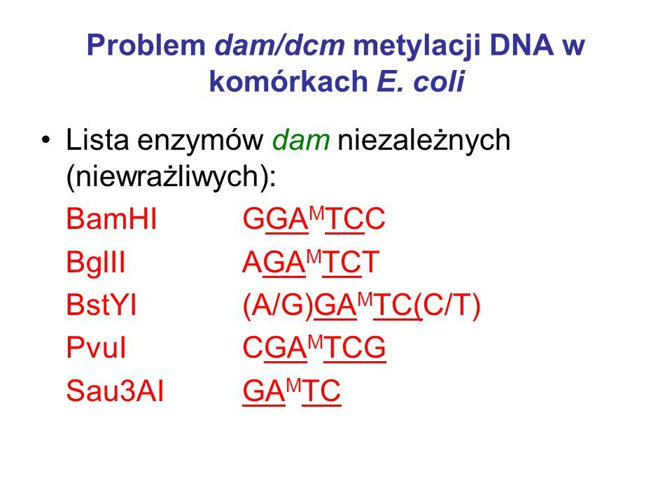 Problem dam/dcm metylacji DNA w komórkach E. coli Lista enzymów dam niezależnych (niewrażliwych): BamHI GGA M TCC BglII AGA M TCT BstYI (A/G)GA M TC(C