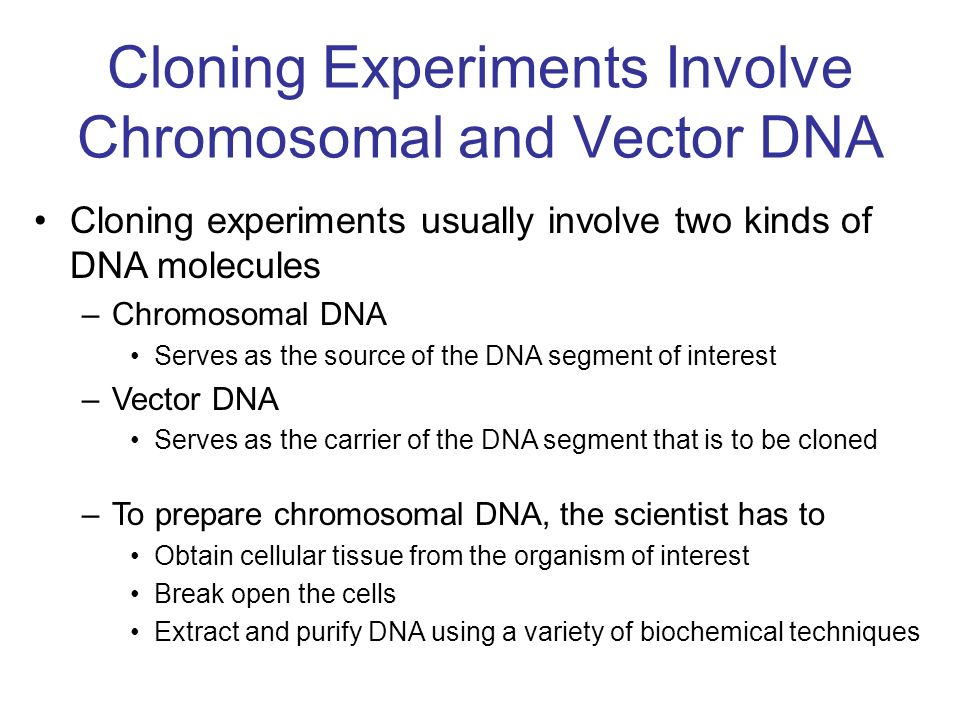 The cell that harbors the vector is called the host cell –When a vector is replicated inside a host cell, the DNA that it carries is also replicated The vectors commonly used in gene cloning were originally derived from two natural sources –1.