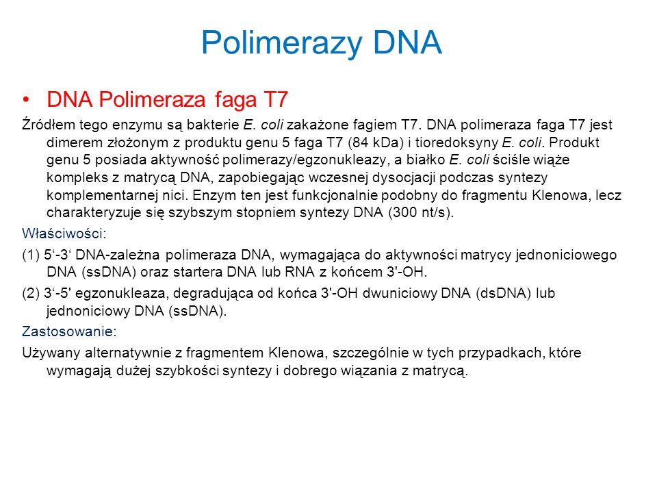 Polimerazy DNA DNA Polimeraza faga T7 Źródłem tego enzymu są bakterie E. coli zakażone fagiem T7. DNA polimeraza faga T7 jest dimerem złożonym z produ