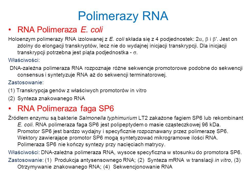 Polimerazy RNA RNA Polimeraza E. coli Holoenzym polimerazy RNA izolowanej z E. coli składa się z 4 podjednostek: 2, i '. Jest on zdolny do elongacji t