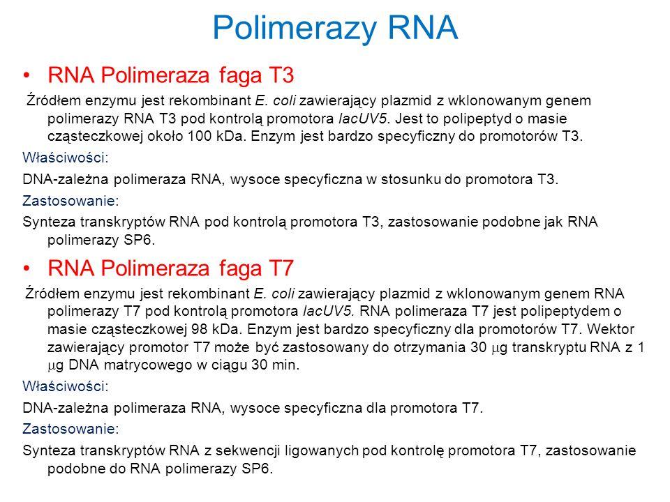 Polimerazy RNA RNA Polimeraza faga T3 Źródłem enzymu jest rekombinant E. coli zawierający plazmid z wklonowanym genem polimerazy RNA T3 pod kontrolą p