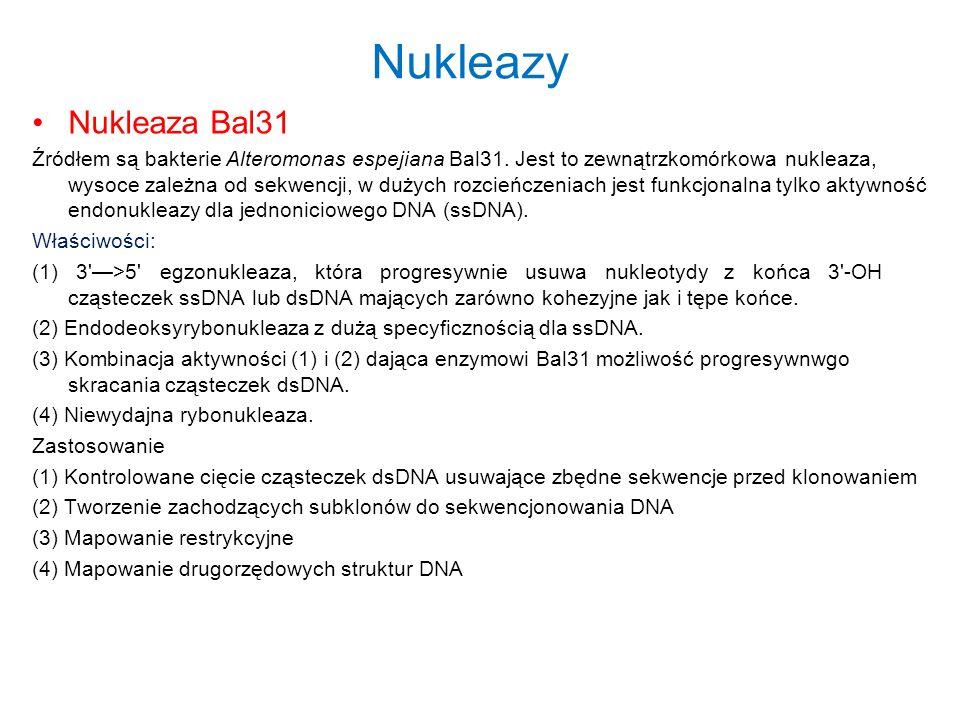 Nukleazy Nukleaza Bal31 Źródłem są bakterie Alteromonas espejiana Bal31. Jest to zewnątrzkomórkowa nukleaza, wysoce zależna od sekwencji, w dużych roz
