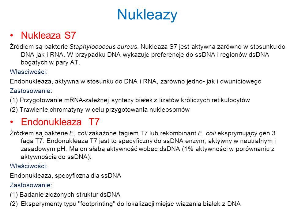 Nukleazy Nukleaza S7 Źródłem są bakterie Staphylococcus aureus. Nukleaza S7 jest aktywna zarówno w stosunku do DNA jak i RNA. W przypadku DNA wykazuje