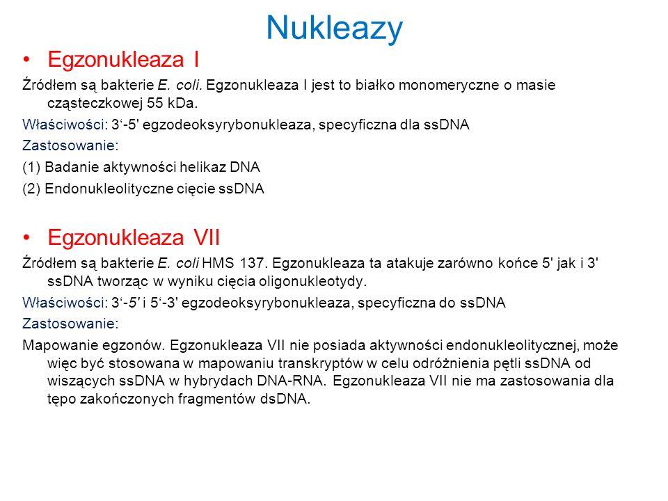 Nukleazy Egzonukleaza I Źródłem są bakterie E. coli. Egzonukleaza I jest to białko monomeryczne o masie cząsteczkowej 55 kDa. Właściwości: 3-5' egzode