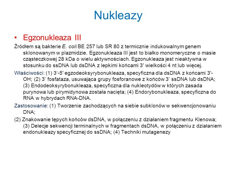 Nukleazy Egzonukleaza III Źródłem są bakterie E. coli BE 257 lub SR 80 z termicznie indukowalnym genem sklonowanym w plazmidzie. Egzonukleaza III jest