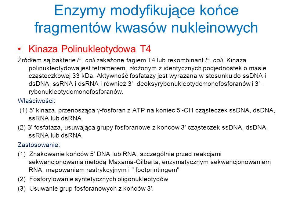 Enzymy modyfikujące końce fragmentów kwasów nukleinowych Kinaza Polinukleotydowa T4 Źródłem są bakterie E. coli zakażone fagiem T4 lub rekombinant E.