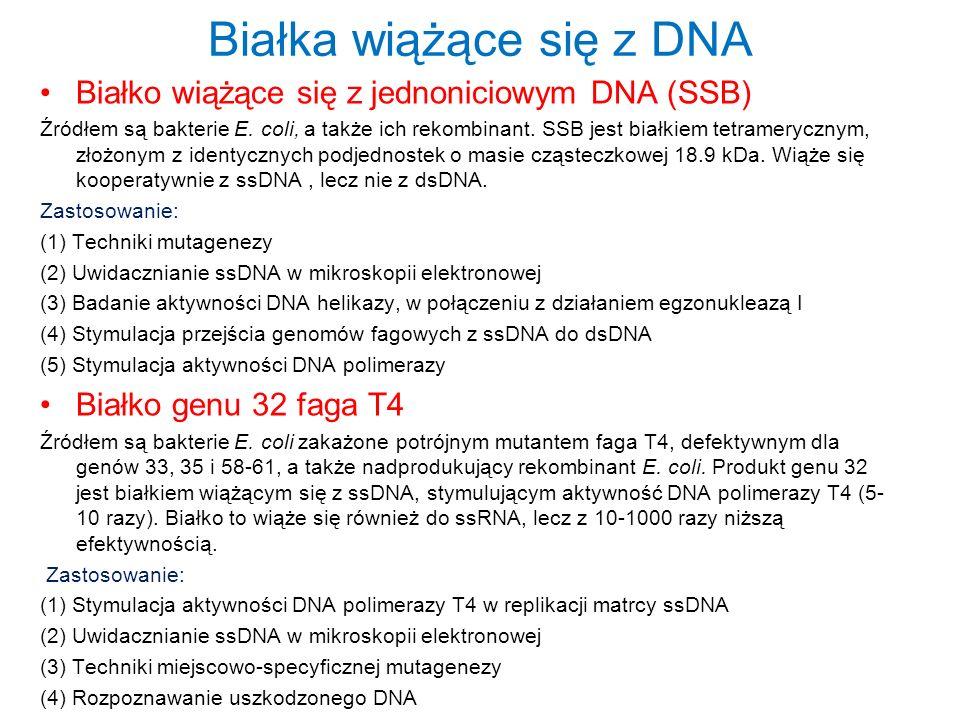 Białka wiążące się z DNA Białko wiążące się z jednoniciowym DNA (SSB) Źródłem są bakterie E. coli, a także ich rekombinant. SSB jest białkiem tetramer