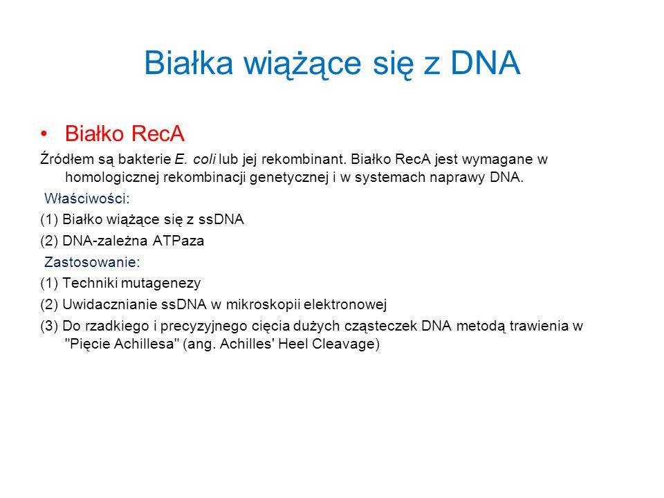 Białka wiążące się z DNA Białko RecA Źródłem są bakterie E. coli lub jej rekombinant. Białko RecA jest wymagane w homologicznej rekombinacji genetyczn
