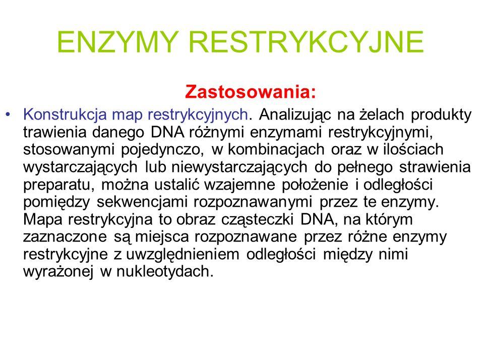 ENZYMY RESTRYKCYJNE Zastosowania: Konstrukcja map restrykcyjnych. Analizując na żelach produkty trawienia danego DNA różnymi enzymami restrykcyjnymi,