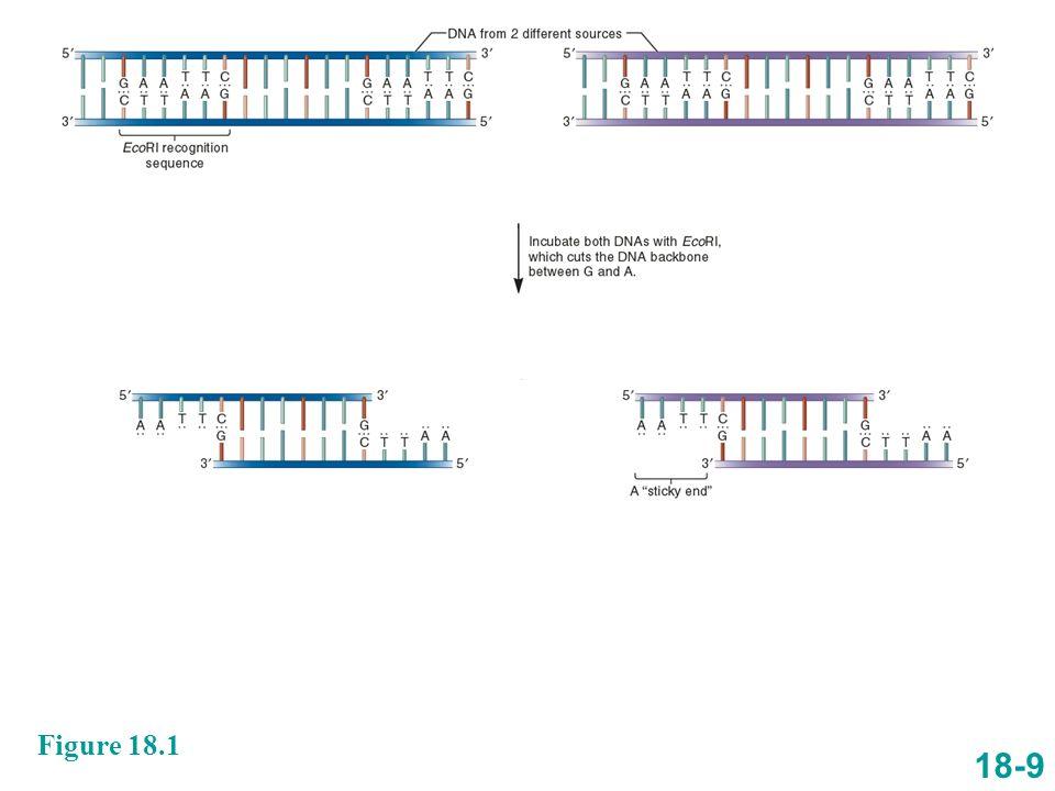 Jednostka enzymu restrykcyjnego to taka jego ilość, która trawi kompletnie 1mg DNA faga lambda (około 50 kb) w czasie 1 godz.