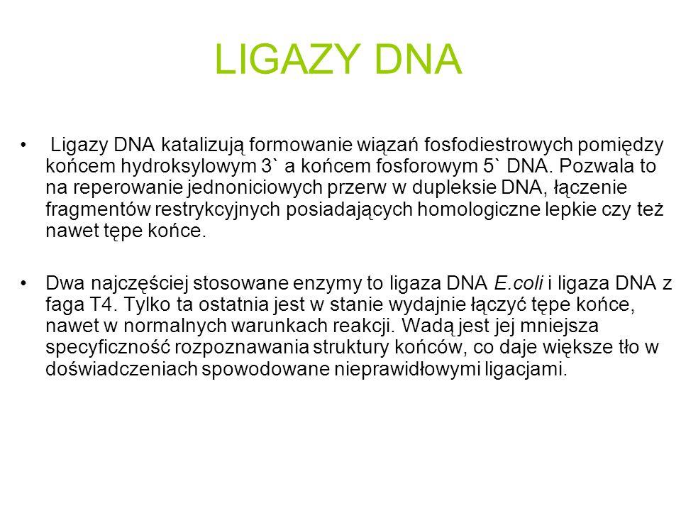 Ligazy DNA katalizują formowanie wiązań fosfodiestrowych pomiędzy końcem hydroksylowym 3` a końcem fosforowym 5` DNA.