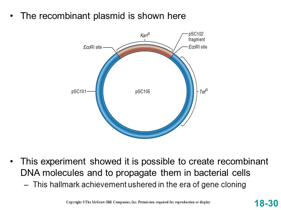 Copyright ©The McGraw-Hill Companies, Inc. Permission required for reproduction or display The recombinant plasmid is shown here 18-30 This experiment