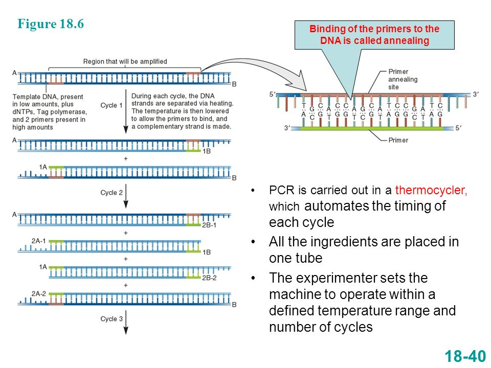 18-40 PCR is carried out in a thermocycler, which automates the timing of each cycle All the ingredients are placed in one tube The experimenter sets