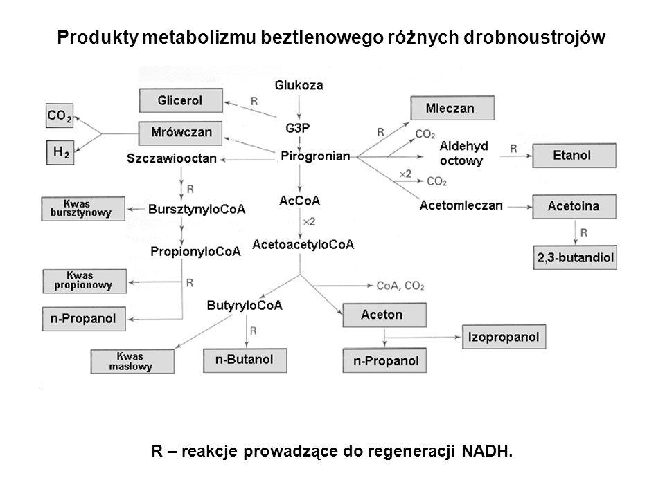 SubstancjaDrobnoustrójZastosowanie Kwas octowy Aceton Butanol Glicerol Izopropanol 1,3-propandiol Kwas fumarowy Kwas mlekowy Kwas cytrynowy Acetobacter spp.