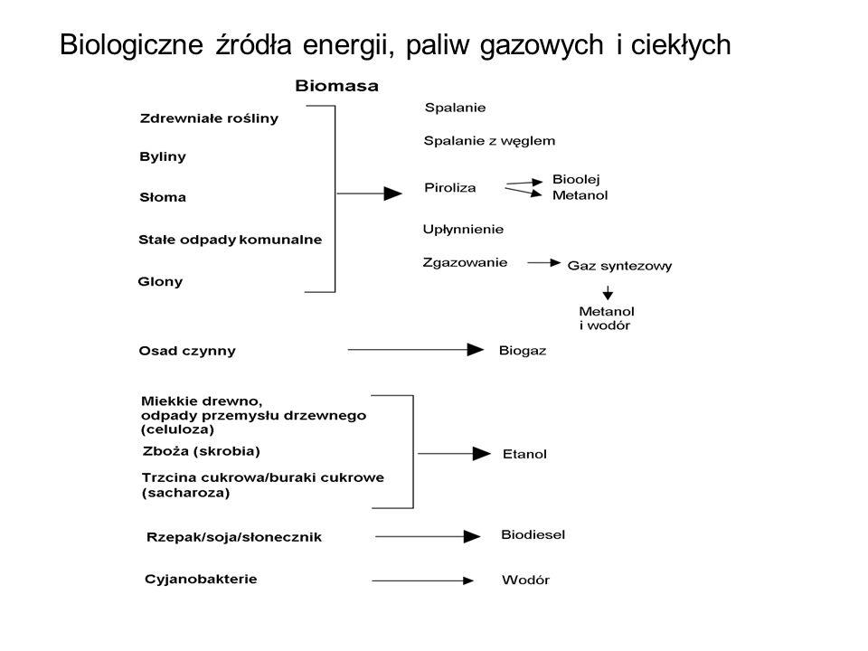Biologiczne źródła energii, paliw gazowych i ciekłych