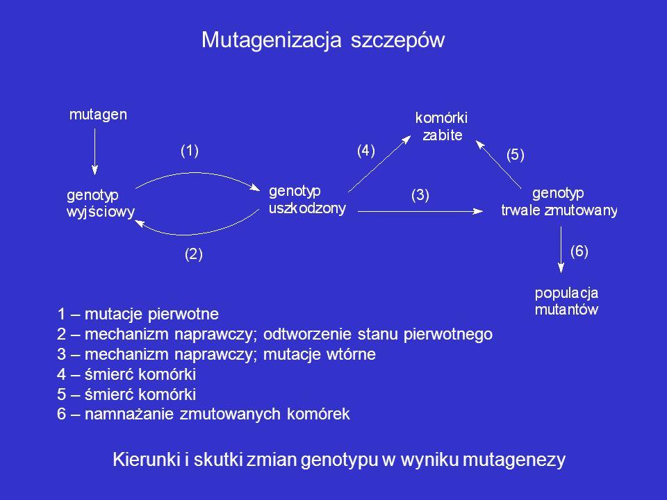 ULEPSZANIE SZCZEPÓW PRZEMYSŁOWYCH Mutagenizacja Hybrydyzacja szczepów Technologia rekombinowanego DNA