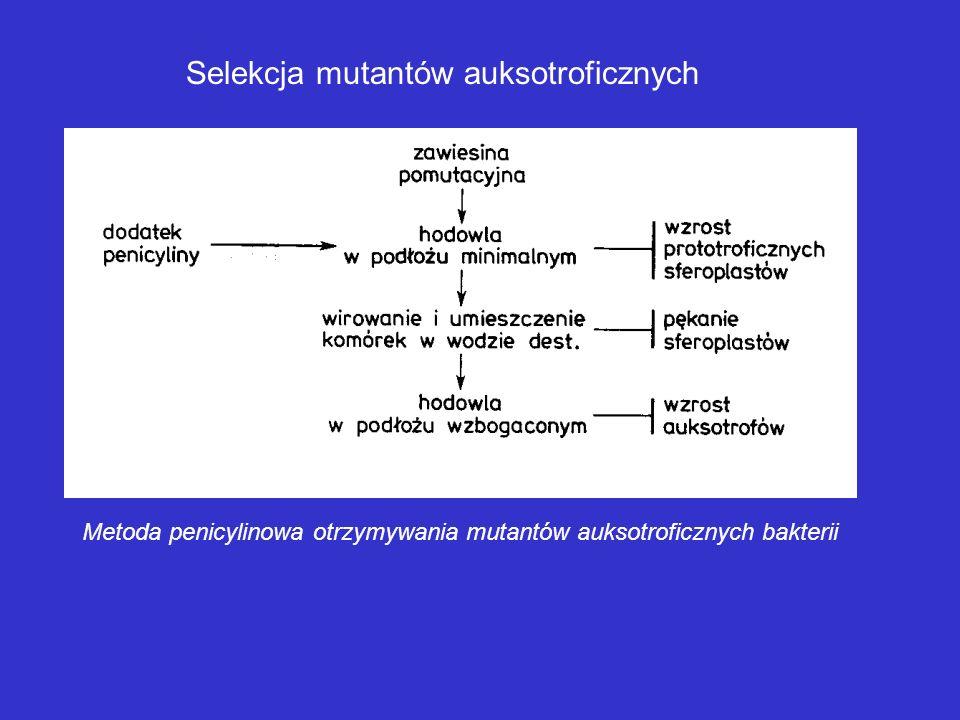 1 – mutacje pierwotne 2 – mechanizm naprawczy; odtworzenie stanu pierwotnego 3 – mechanizm naprawczy; mutacje wtórne 4 – śmierć komórki 5 – śmierć kom