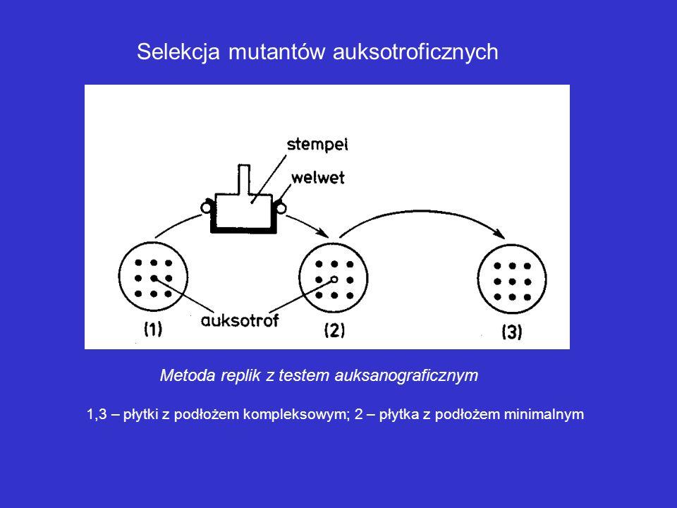 Selekcja mutantów auksotroficznych Metoda penicylinowa otrzymywania mutantów auksotroficznych bakterii
