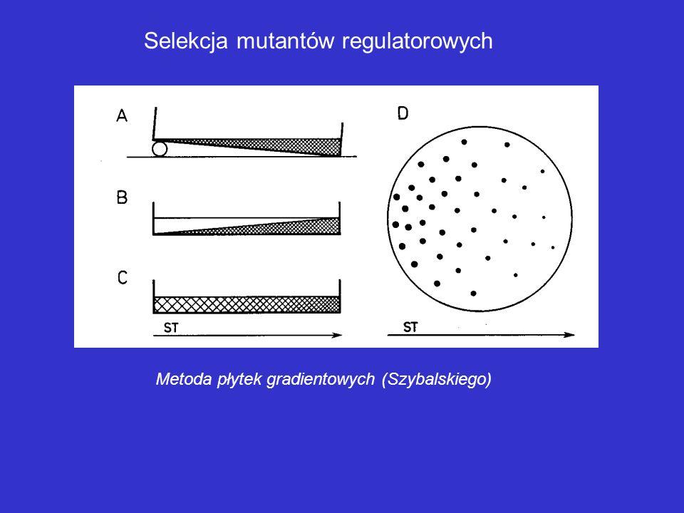 Selekcja mutantów auksotroficznych Metoda replik z testem auksanograficznym 1,3 – płytki z podłożem kompleksowym; 2 – płytka z podłożem minimalnym