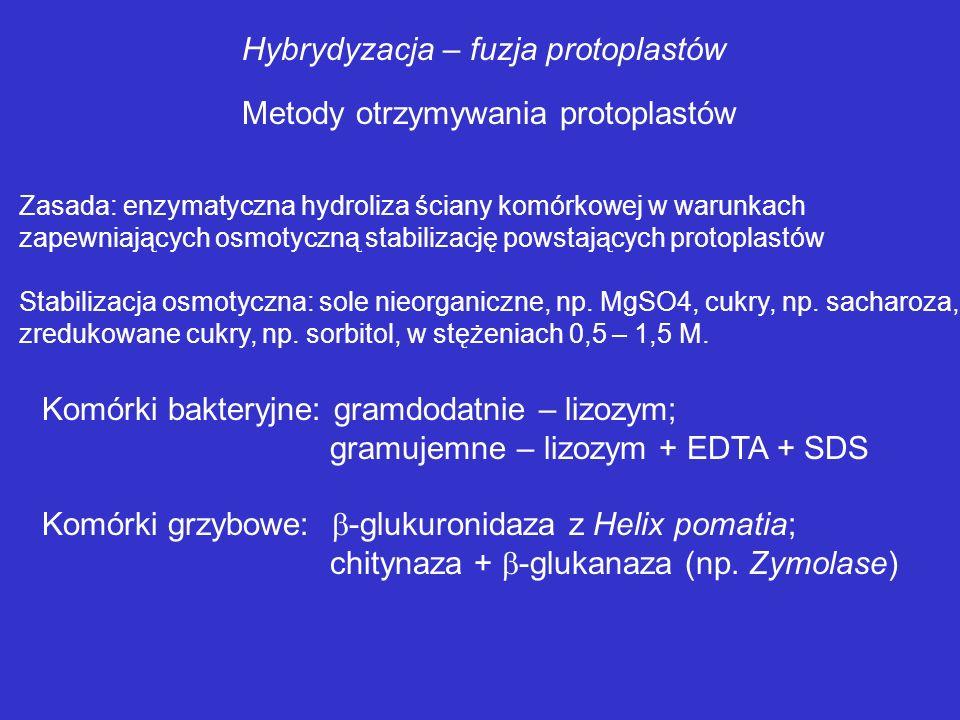 Hybrydyzacja – fuzja protoplastów Główna przeszkoda w naturalnej plazmogamii – ściana komórkowa Protoplastyzacja komórek zasadniczo zwiększa częstotli