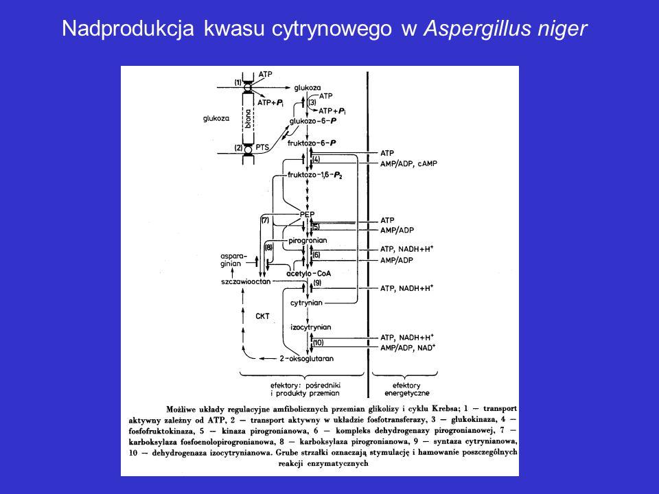 Mutanty szczególnie przydatne dla otrzymywania wysokowydajnych producentów metabolitów pierwotnych MUTANTY AUKSOTROFICZNE (ŻYWIENIOWE) MUTANTY REGULAT