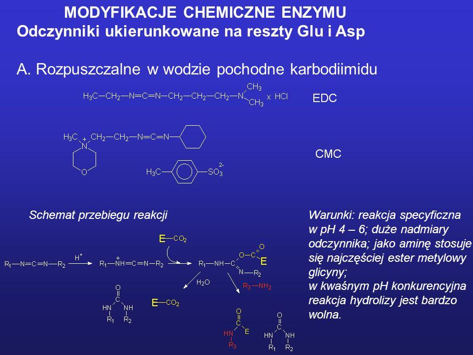 MODYFIKACJE CHEMICZNE ENZYMU Odczynniki ukierunkowane na reszty tryptofanylowe A. N-bromoimid kwasu bursztynowego Warunki: reakcja w buforze octanowym