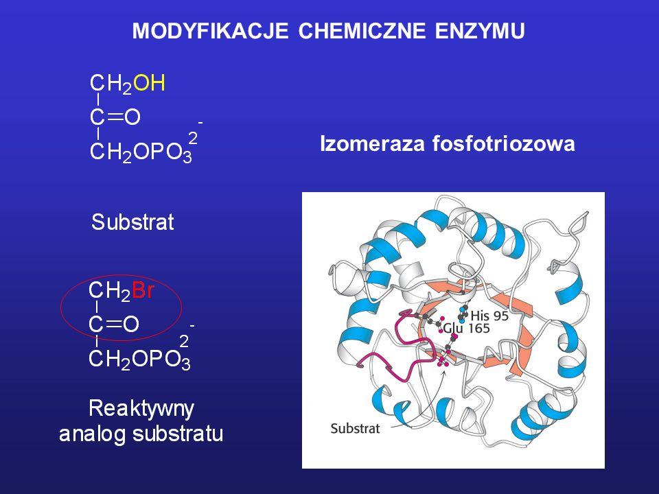 MODYFIKACJE CHEMICZNE ENZYMU Odczynniki ukierunkowane na reszty Glu i Asp A. Rozpuszczalne w wodzie pochodne karbodiimidu Schemat przebiegu reakcjiWar