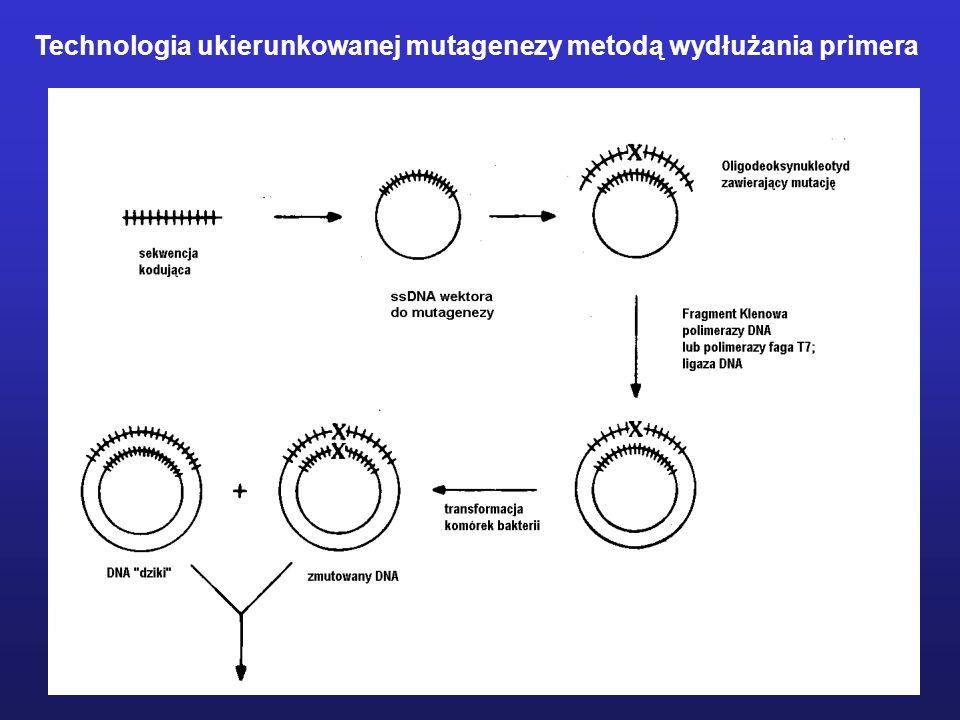 MODYFIKACJE CHEMICZNE ENZYMU Izomeraza fosfotriozowa