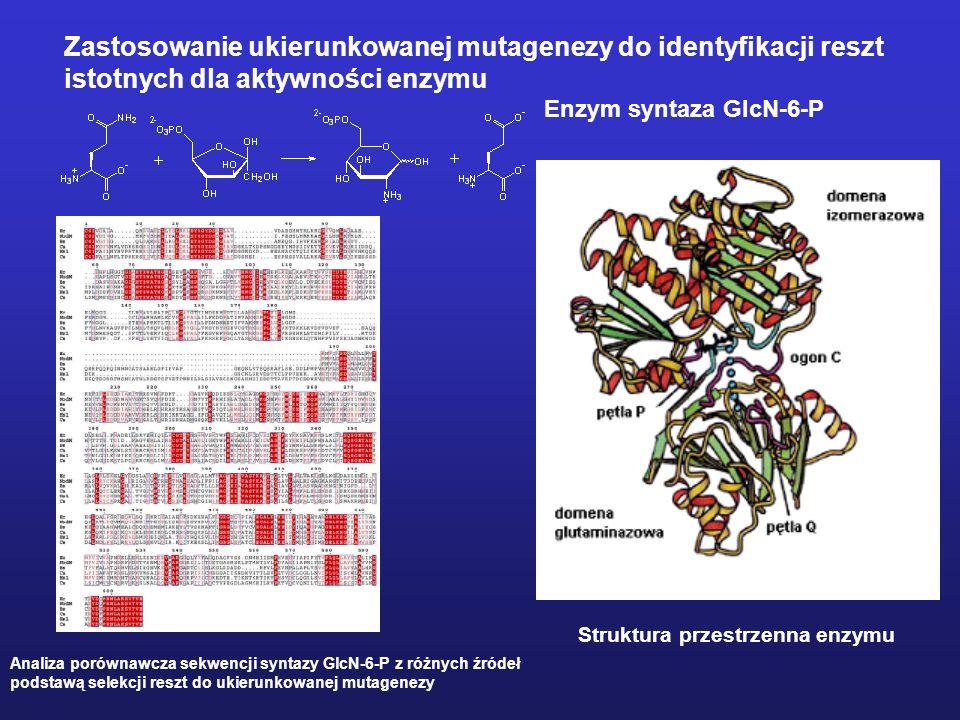 Technologia ukierunkowanej mutagenezy metodą wydłużania primera