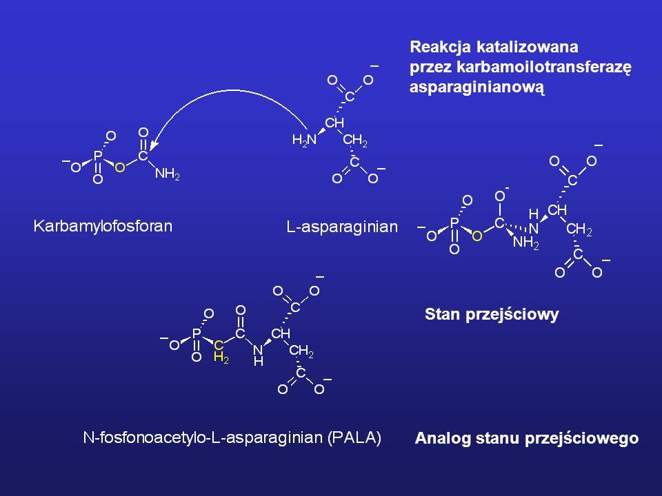Detekcja intermediatów Niektóre produkty przejściowe reakcji enzymatycznej są stosunkowo stabilne (głębokie minimum energetyczne) – istnieje możliwość detekcji metodami spektroskopowymi: spektrofluorymetria, NMR niskotemperaturowy; Początkowe etapy reakcji katalizowanej przez chymotrypsynę Redukcja produktu przejściowego w postaci zasady Schiffa prowadzi do powstania stabilnego adduktu Wyłapywanie intermediatów za pomocą reakcji chemicznej