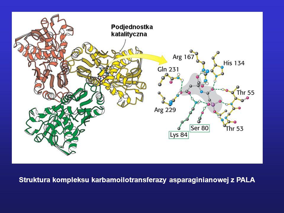 Struktura kompleksu karbamoilotransferazy asparaginianowej z PALA