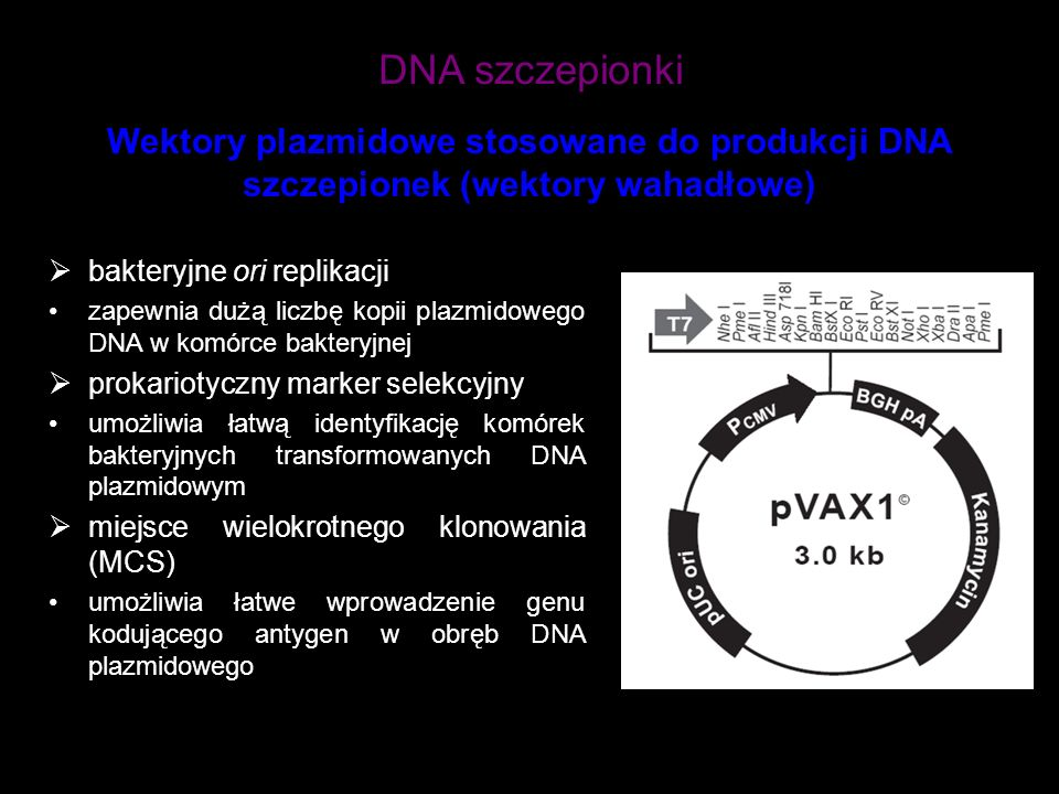 DNA szczepionki bakteryjne ori replikacji zapewnia dużą liczbę kopii plazmidowego DNA w komórce bakteryjnej prokariotyczny marker selekcyjny umożliwia