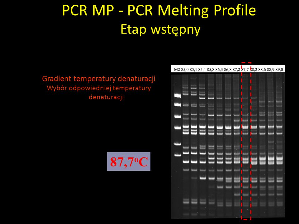 Gradient temperatury denaturacji Wybór odpowiedniej temperatury denaturacji PCR MP - PCR Melting Profile Etap wstępny 87,7 o C