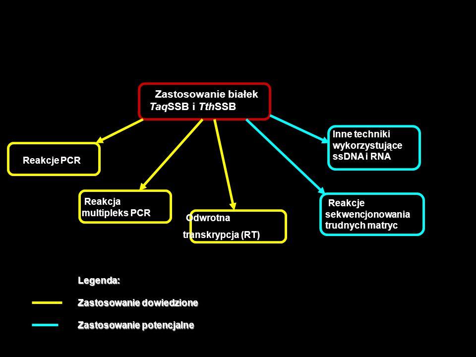 Zastosowanie białek TaqSSB i TthSSB Reakcje PCR Reakcja multipleks PCR Reakcje sekwencjonowania trudnych matryc Odwrotna transkrypcja (RT) Inne techni