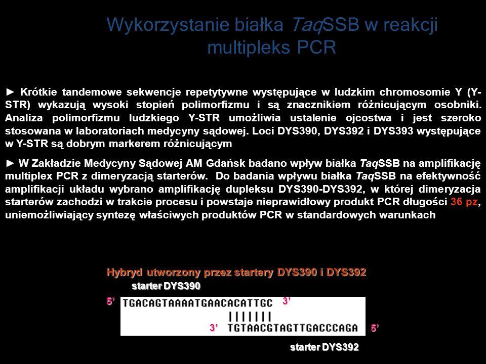 Wykorzystanie białka TaqSSB w reakcji multipleks PCR Hybryd utworzony przez startery DYS390 i DYS392 Krótkie tandemowe sekwencje repetytywne występują