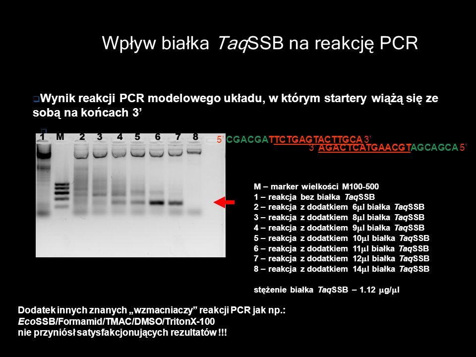 Wpływ białka TaqSSB na reakcję PCR M – marker wielkości M100-500 1 – reakcja bez białka TaqSSB 2 – reakcja z dodatkiem 6 l białka TaqSSB 3 – reakcja z