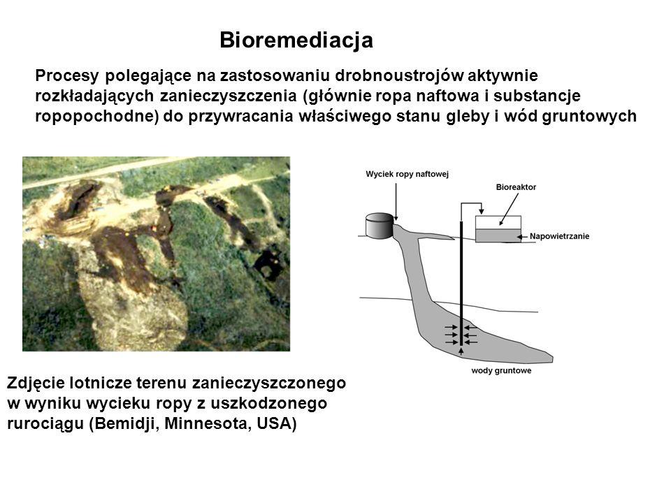 Bioremediacja Procesy polegające na zastosowaniu drobnoustrojów aktywnie rozkładających zanieczyszczenia (głównie ropa naftowa i substancje ropopochod