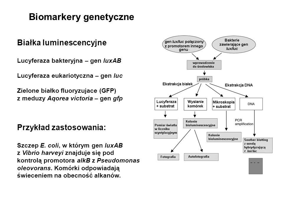 Białka luminescencyjne Lucyferaza bakteryjna – gen luxAB Lucyferaza eukariotyczna – gen luc Zielone białko fluoryzujace (GFP) z meduzy Aqorea victoria
