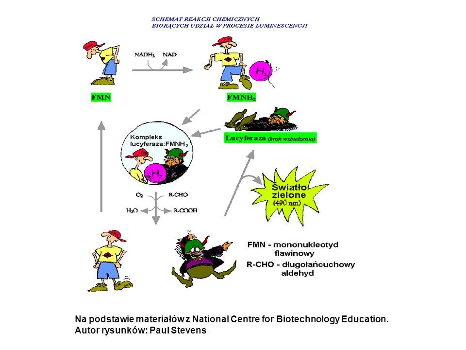 Na podstawie materiałów z National Centre for Biotechnology Education. Autor rysunków: Paul Stevens