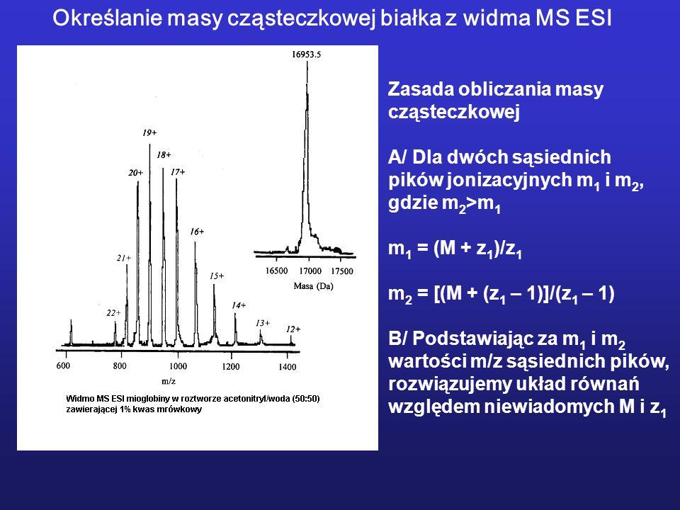Zasada obliczania masy cząsteczkowej A/ Dla dwóch sąsiednich pików jonizacyjnych m 1 i m 2, gdzie m 2 >m 1 m 1 = (M + z 1 )/z 1 m 2 = [(M + (z 1 – 1)]/(z 1 – 1) B/ Podstawiając za m 1 i m 2 wartości m/z sąsiednich pików, rozwiązujemy układ równań względem niewiadomych M i z 1 Określanie masy cząsteczkowej białka z widma MS ESI