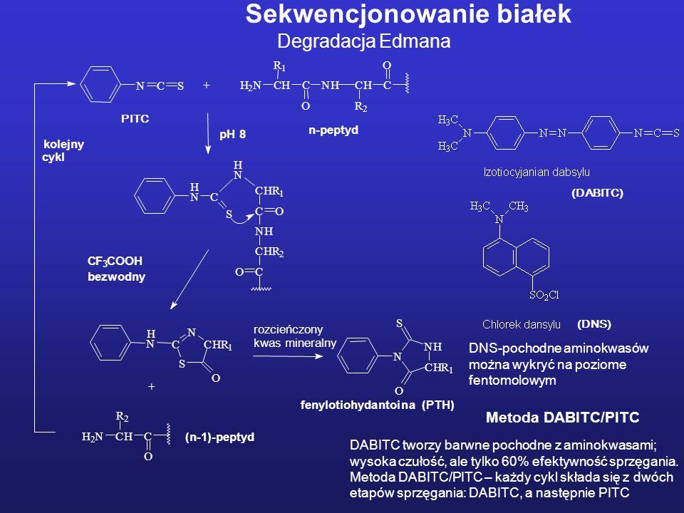 cykl Sekwencjonowanie białek Degradacja Edmana Metoda DABITC/PITC DABITC tworzy barwne pochodne z aminokwasami; wysoka czułość, ale tylko 60% efektywność sprzęgania.