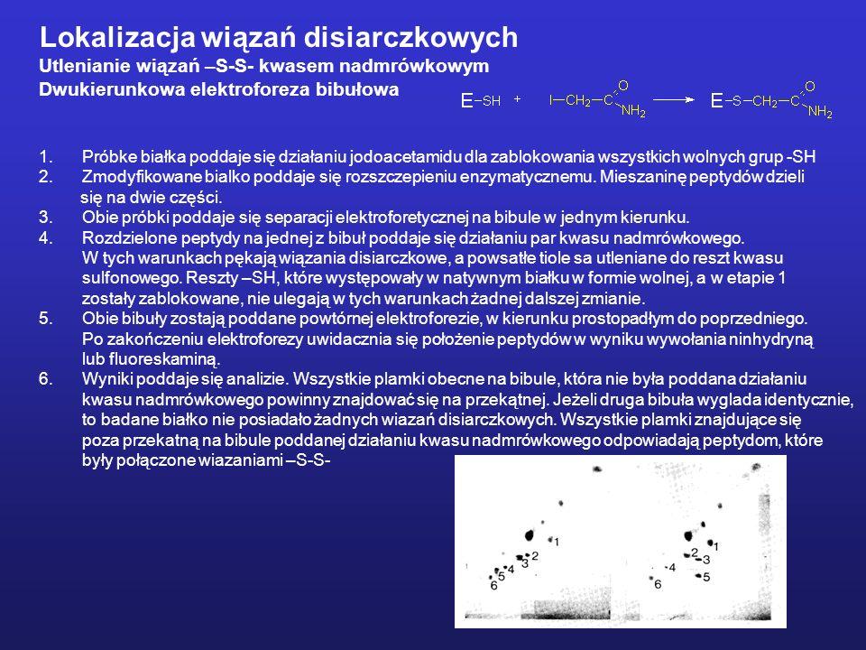 Lokalizacja wiązań disiarczkowych Utlenianie wiązań –S-S- kwasem nadmrówkowym Dwukierunkowa elektroforeza bibułowa 1.Próbke białka poddaje się działaniu jodoacetamidu dla zablokowania wszystkich wolnych grup -SH 2.Zmodyfikowane bialko poddaje się rozszczepieniu enzymatycznemu.