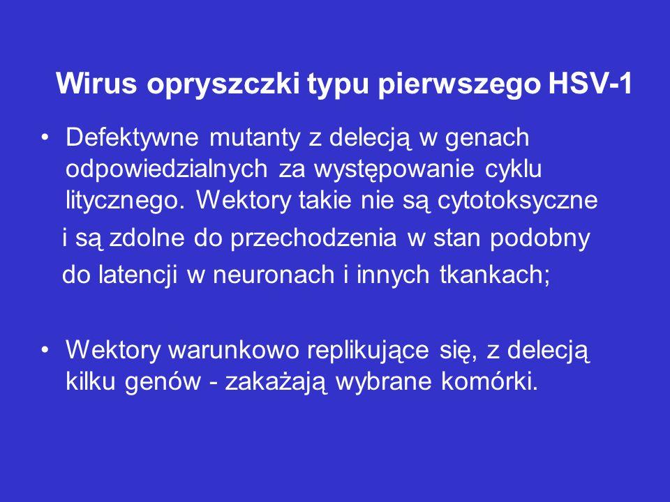 Wirus opryszczki typu pierwszego HSV-1 Defektywne mutanty z delecją w genach odpowiedzialnych za występowanie cyklu litycznego. Wektory takie nie są c