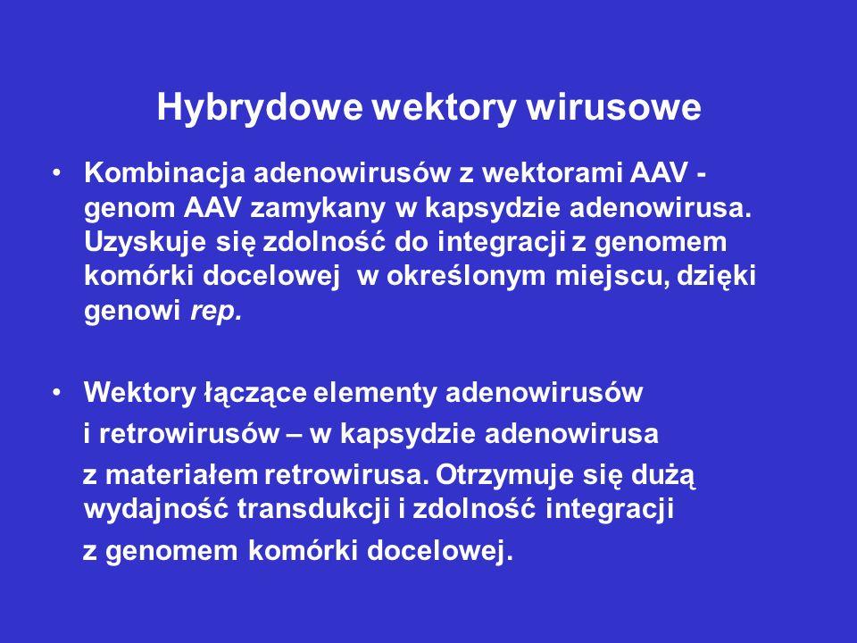Hybrydowe wektory wirusowe Kombinacja adenowirusów z wektorami AAV - genom AAV zamykany w kapsydzie adenowirusa. Uzyskuje się zdolność do integracji z