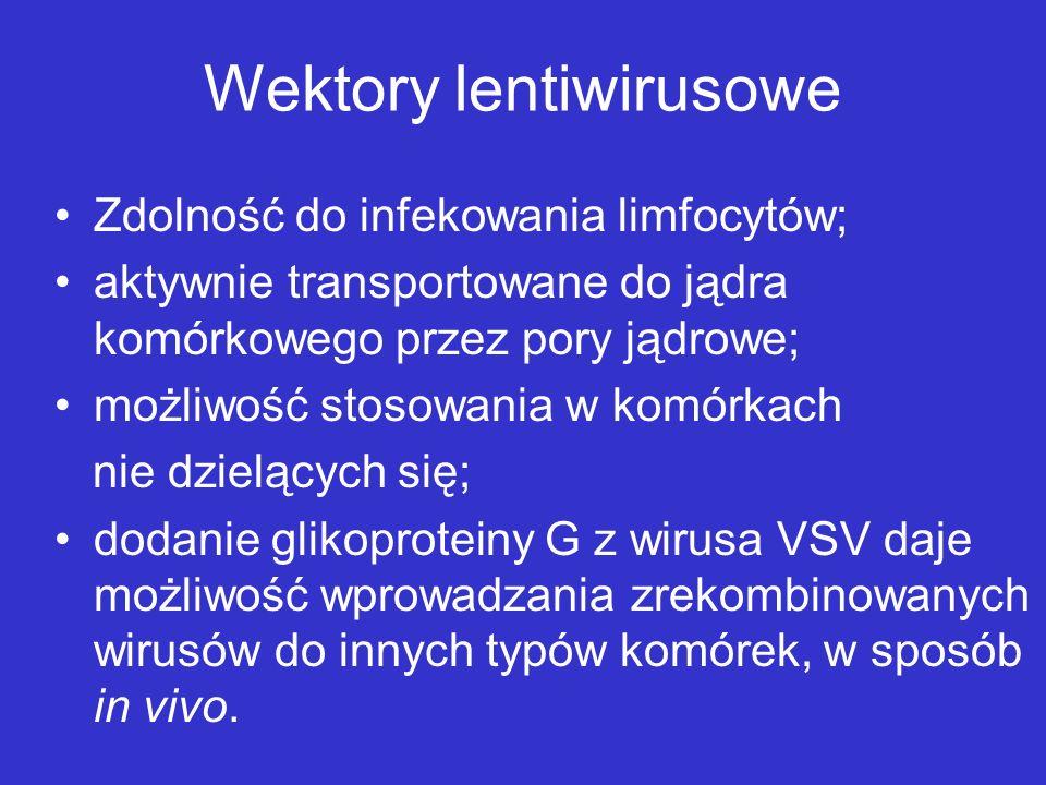 Wektory lentiwirusowe Zdolność do infekowania limfocytów; aktywnie transportowane do jądra komórkowego przez pory jądrowe; możliwość stosowania w komó