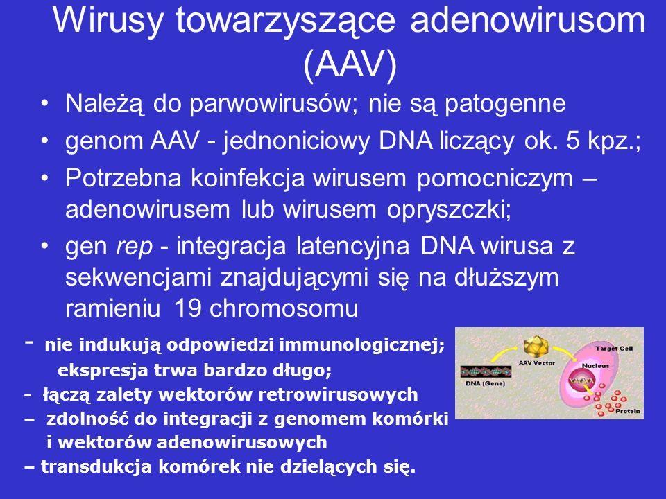 Wirus opryszczki typu pierwszego HSV-1 Dwuniciowy DNA, duży genom - (152 kpz), zawierający 84 geny, replikacja zachodzi nawet po usunięciu połowy z nich; możliwość wprowadzenia bardzo długich transgenów w różne miejsca wektora; nie integruje się do genomu; infekuje szeroki zakres komórek; neurotropizm.