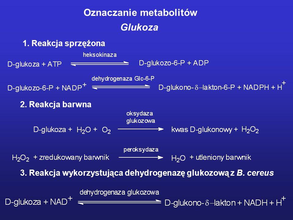Oznaczanie metabolitów Glukoza 1. Reakcja sprzężona 2. Reakcja barwna 3. Reakcja wykorzystująca dehydrogenazę glukozową z B. cereus