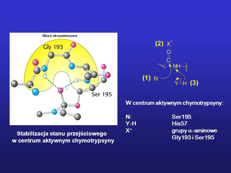 Stabilizacja stanu przejściowego w centrum aktywnym chymotrypsyny W centrum aktywnym chymotrypsyny: N:Ser195 Y-HHis57 X + grupy -aminowe Gly193 i Ser195