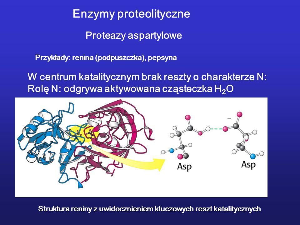 Enzymy proteolityczne Proteazy aspartylowe Przykłady: renina (podpuszczka), pepsyna Struktura reniny z uwidocznieniem kluczowych reszt katalitycznych W centrum katalitycznym brak reszty o charakterze N: Rolę N: odgrywa aktywowana cząsteczka H 2 O