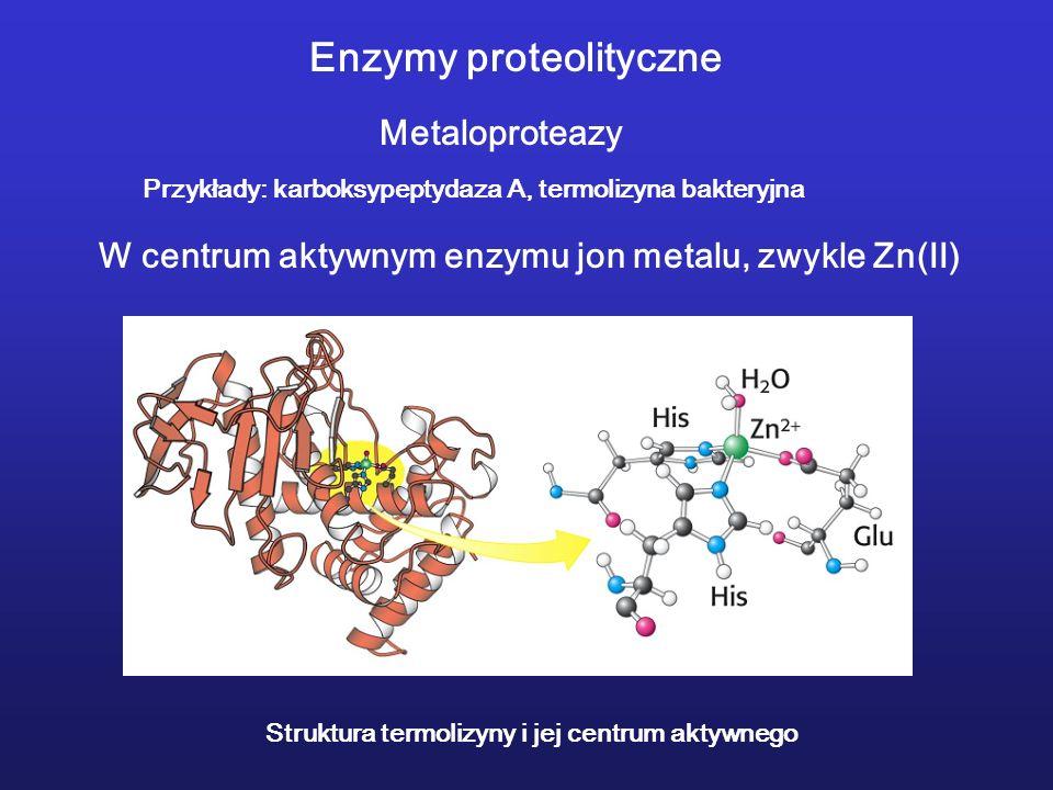 Enzymy proteolityczne Metaloproteazy Przykłady: karboksypeptydaza A, termolizyna bakteryjna W centrum aktywnym enzymu jon metalu, zwykle Zn(II) Struktura termolizyny i jej centrum aktywnego